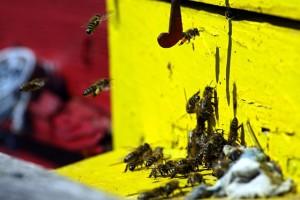 bees-16905_640 - Copy